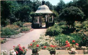 Grandmother's Garden Westfield, MA